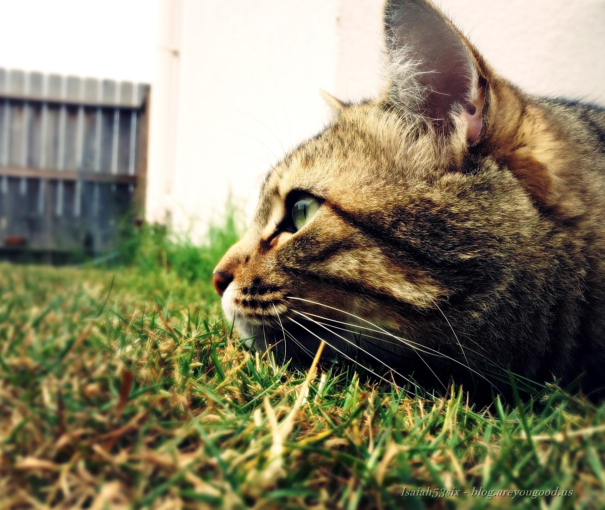 grass_blog